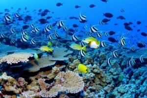 shambala_lodge_Location-Voiture-Guadeloupe-Plonger-en-Guadeloupe
